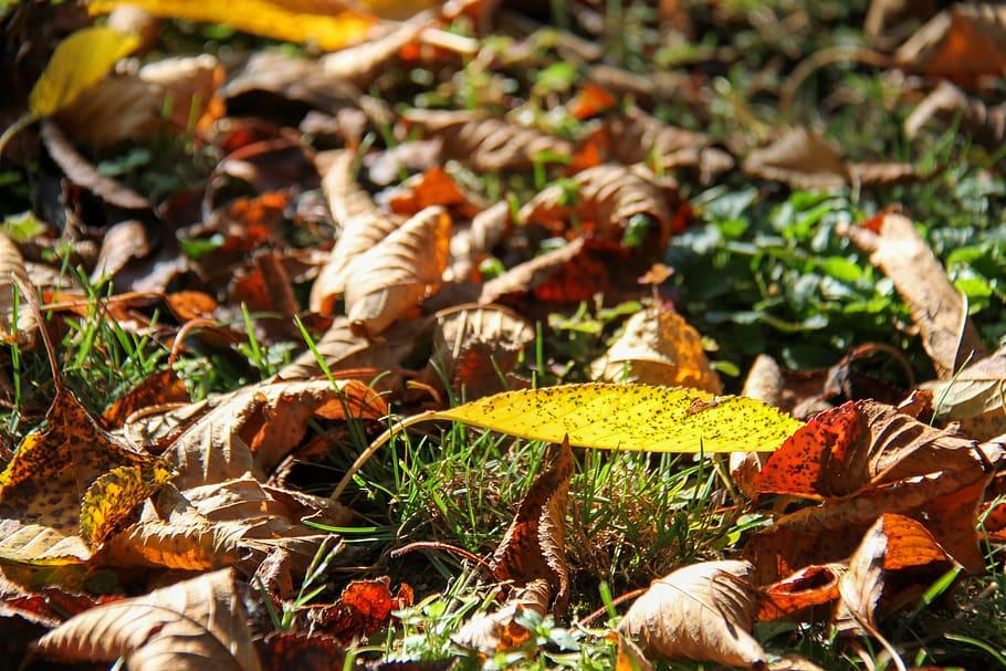 Sun glints off of fallen leaves on the grass – extend the growing season